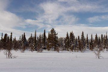Wald in Schwedisch-Lappland von Lucas Planting