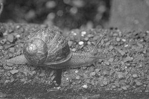 Schnecke (schwarz-weiß) von FotoGraaG Hanneke
