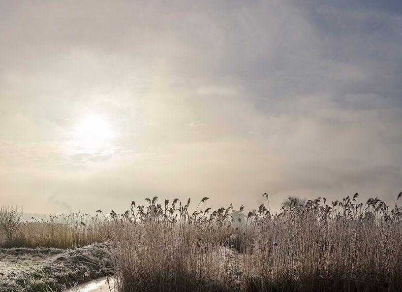 Berijpte rietkraag met een winterzon achter de wolken, Zaandam, , Noord-Holland van Rene van der Meer