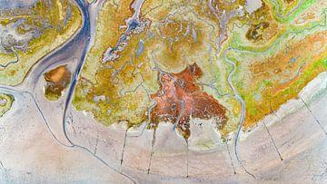 Texel - De Schorre - Rode Zeekraal 05 van Texel360Fotografie Richard Heerschap