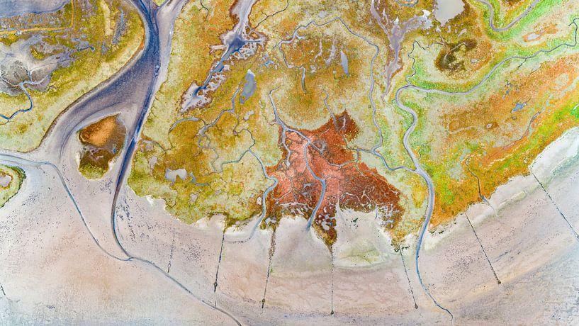 Texel - Le rauque - Red Marsh samphire 05 sur Texel360Fotografie Richard Heerschap