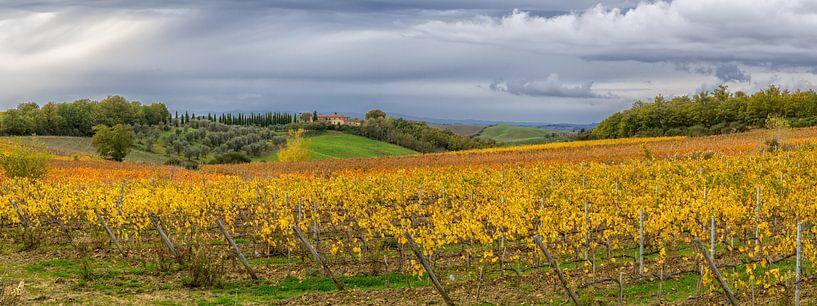Autumn vineyard in Tuscany - panorama van Teun Ruijters