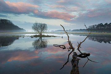 Reflexionen in der Natur von Paul Begijn