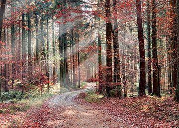 Roter Herbstwald mit Sonnenstrahlen von Christian Mueller
