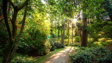 Prachtige laan met verschillende kleuren groen, rhododendrons en een vaantjesboom bovenin beeld van gooifotograaf