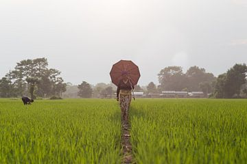 Reisfeld Nepal von Merijn Geurts