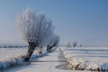 Berijpte wilgen langs een bevroren sloot van