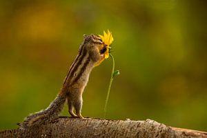 Blumen lieben Eichhörnchen. von Erik de Rijk