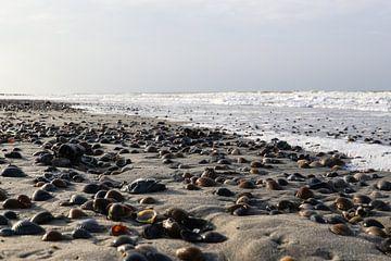 schelpen op het strand van domburg van Frans Versteden