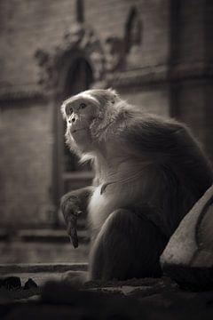 Erleuchteter Affe von Edgar Bonnet-behar