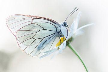 Vlinderportret van Iris Waanders