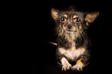 Erwartungsvoller Hund von Günter Albers