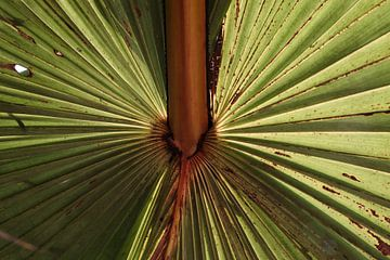 Palmenblatt von Bibian Been