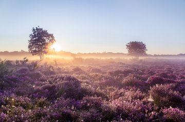 Sonnenaufgang auf der Heide von Emile Kaihatu