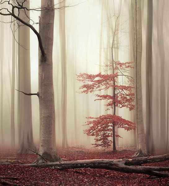 One tree life - The charming one van Rob Visser