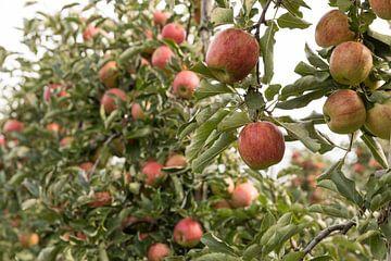 Boomgaard met rijpe appels van Marijke van Eijkeren