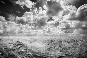 Clouds van