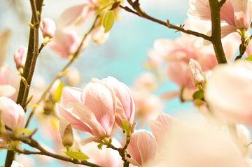 Lentebloesem magnolia 6 van Joske Kempink