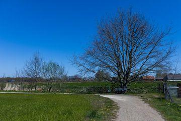 Boom bij de start van de lente tegen een staalblauwe lucht van Kelly De Preter