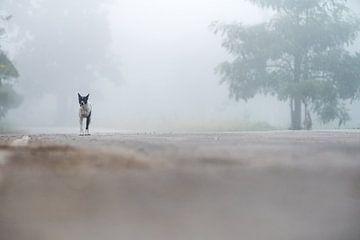 een mooie hond in de mist van Marcel Derweduwen