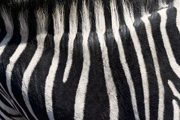 zebra abstract van gj heinhuis