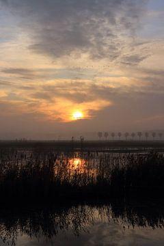 Zonsopkomst bij park Lingezegen Arnhem Elst van Bobsphotography