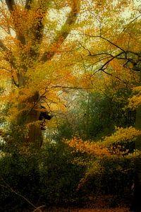 kleurrijke herfst van