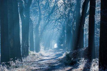 Bos van Jouke Wijnstra Fotografie