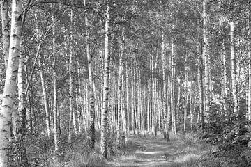 Hohe Bäume (fangen viel...) von Ingrid Mooij