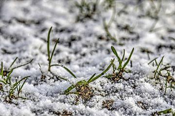 Grashalme in der Schnee von