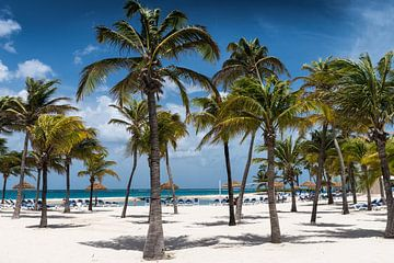 palmen aan het strand van Aruba van eusphotography