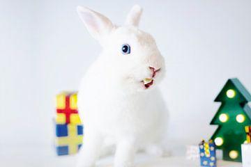Kest konijn van