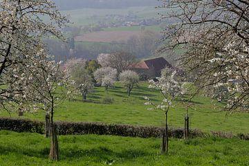Bloesems in Cottessen, heuvelland Zuid-Limburg van Ton Reijnaerdts