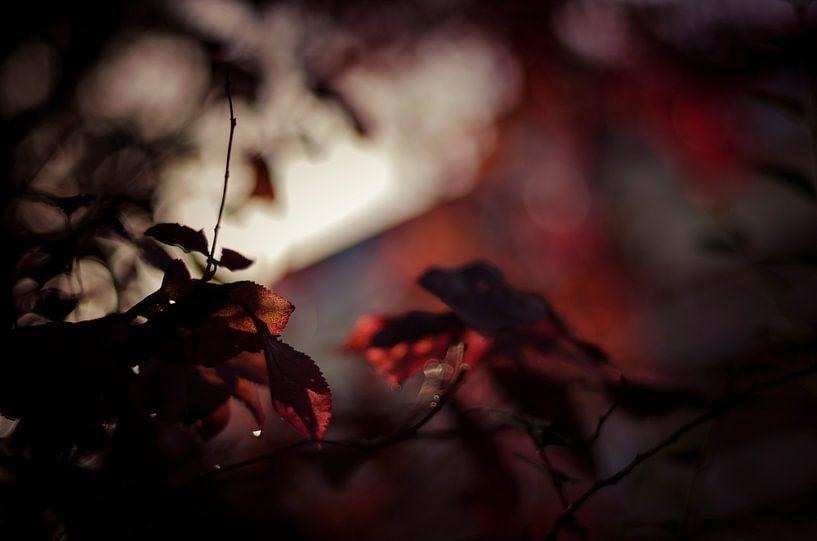 Autumn's fire van Dick Nieswaag