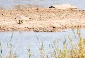 Krokodil in Zuid-Afrika van Eveline van Beusichem