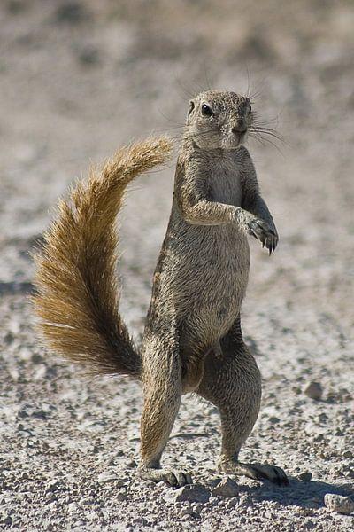 Ground Squirrel van BL Photography