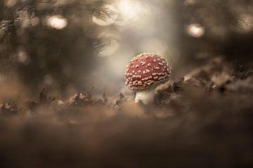 Sprookjes paddenstoel van Marijke de Haze