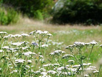 Bloemen von Felix wellink