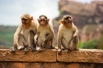 Drei Affen auf der Mauer in Indien von Camille Van den Heuvel
