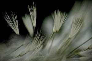Donszacht in de wind