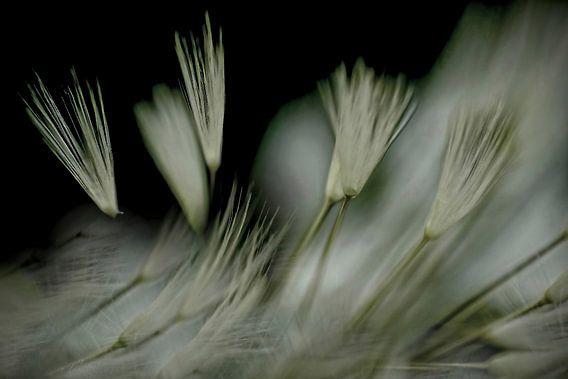 Donszacht in de wind van Marlies Prieckaerts