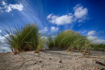 Duinen bij Noordwijk van Gerard Veerling