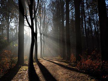 Herbstmorgen von Bart Ceuppens