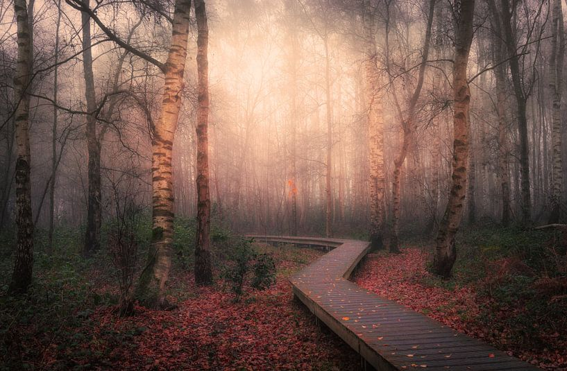 Follow the trail van Wim van D