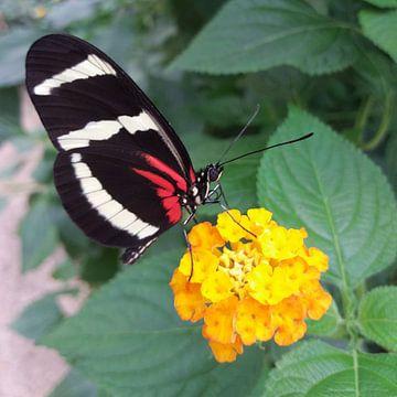 Een vlinder opzoek naar nectar von Yvonne Koppers