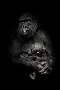 bezorgde moeder is een bedreiging van buitenaf. Gorilla aap moeder (of haar zus) verpleegt haar klei van Michael Semenov