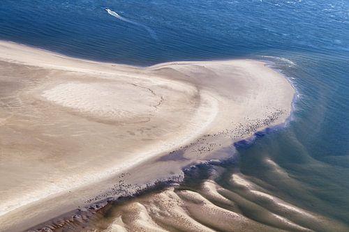 Zeehonden op zandbank van