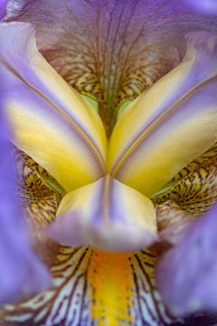 Kern aus blau-violetter Lilie (Iris) von Tot Kijk Fotografie: natuur aan de muur