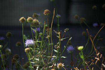 Blumen im eigenen Garten von Yvonne van Summeren