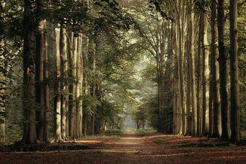 Die Straße. von Jos Erkamp